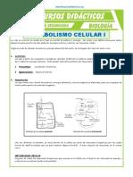 El-Metabolismo-Celular-para-Quinto-de-Secundaria