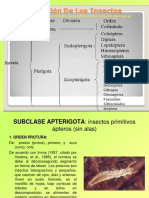 insectos_ordenes_Clase_3.ppt