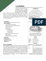 Anatomy_of_the_cerebellum