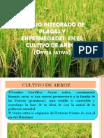 MANEJO DE PLAGA Y ENFERMEDADES EN LOS CULTIVOS DE CEREALES Y CITRICOS. GRUPO 4.ppt
