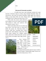 Pidada Merah (Sonneratia Caseolaris)