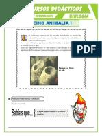 Phylum-Poríferos-y-Phylum-Cnidarios-para-Quinto-de-Secundaria