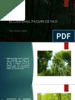 ecosistemul_padurii_de_fag.pptx