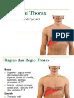 anatomi thorax febri
