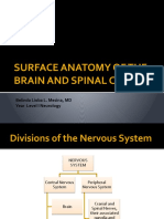 Surface Anatomy of the Brain and Spinal Cord