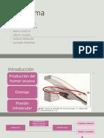 Glaucoma Grupo 2 OFT