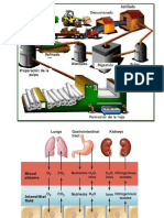 Apuntes_digestivo-BIOING17.pdf