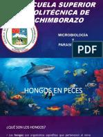 HONGOS ABEJAS Y PECES-1