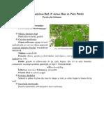 Lp 6 biol. Polygonatum latifolium - Sorghum