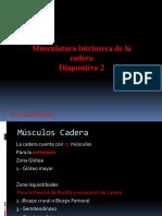 Diapositiva n°2 Musculos intrinsecos de la cadera