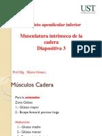 Diapositiva n°3 Musculos externos de la cadera y muslo