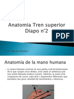 Diapositiva n°11 Anatomia Tren superior