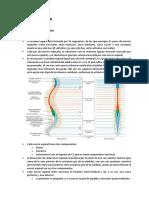 Semiologia medular.pdf