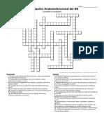 Crucigrama Organización Anatomofuncional del SN -  SIN RESPUESTAS