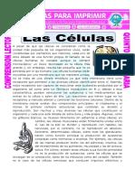 Ficha-Las-Celulas-para-Quinto-de-Primaria.doc