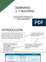 SEMINARIO PIEL Y MUCOSAS.pptx