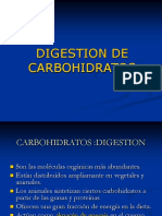 digestion carbo.ppt