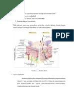 Anatomi fisiologi kulit