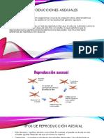 Reproducciones+asexuales