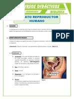 Aparato-Reproductor-Humano-para-Quinto-de-Secundaria