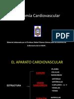 marisol anatomia