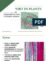 TRANSPORT_IN_PLANTS.ppt