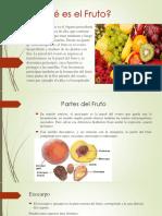 Qué es el Fruto - Botanica-