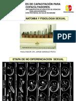 Charla 3. Anatomía y Fisiología Sexual
