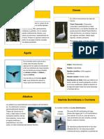10 animales aéreos con descripcion e imagen