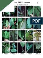 045_Peru-Ficus_v1.1_0