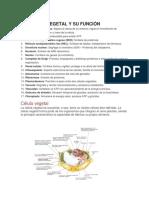 Celula animal y vegetal.docx