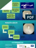 Esparganosis.pptx
