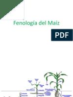 5_Fenología del Maíz.pptx