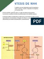Biosintesis del NH4
