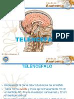 TELENCEFALO (1).pdf