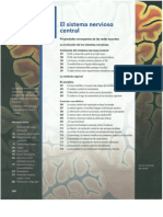 2- Silverthon, D. (2014). Fisiología humana un enfoque integrado. Editorial médica Panamericana. Mexico. Capítulo 9. Parte A