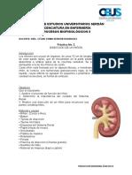 Práctica 2- Disección de riñón.doc