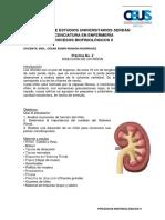 Práctica 2- Disección de riñón