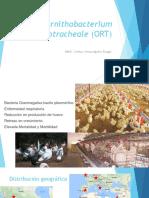 ornithobacteriumrhinotracheale-170926020603