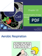 10_respiration_lecture