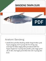 ppt anatomi bandeng tanpa duri.pptx