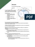 la_vision_y_el_snc.pdf
