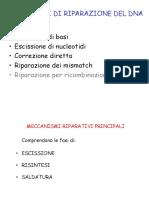 10 Mutazioni del DNA e sistemi di riparazione - 2 (1)
