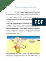 pofidos.docx