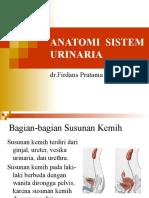 Anatomi Sistem Urinaria