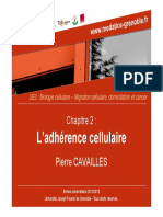 Adhérence cellulaire