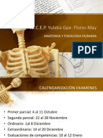 5to. semestre Anatomia