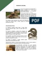 SERPIENTE CASCABEL.docx