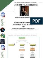 seminario_de_metil_pectil_esterasas (2)