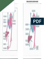 Circulacion fetal y del recien nacido.pptx